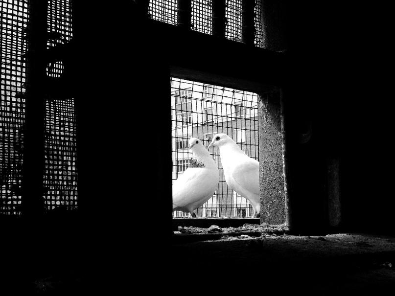 Любовь длиною в полвека: Александр и голуби