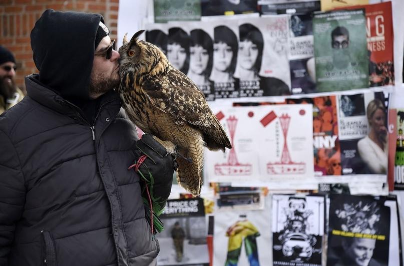 Супер совы, изображение №8