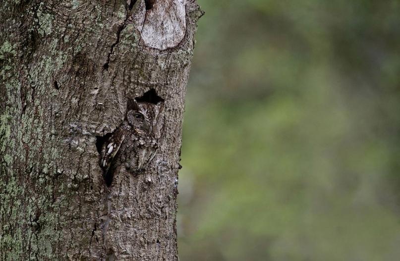 Супер совы, изображение №12