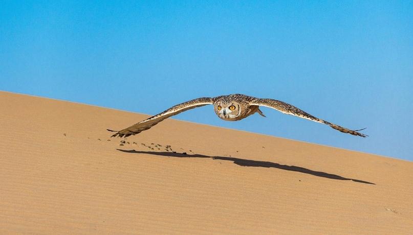 Супер совы, изображение №15