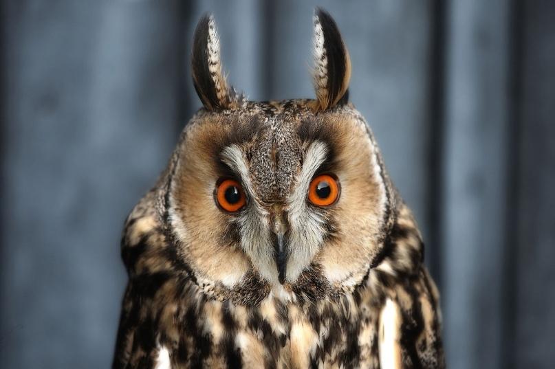 Супер совы, изображение №16